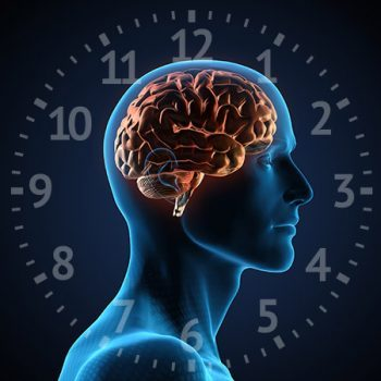 Read more about the article Mellékvese támogatás a cirkadián ciklus segítségével